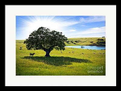 Rural Scenery Framed Prints