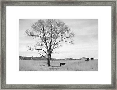 Patagonia Pasture Bw Framed Print