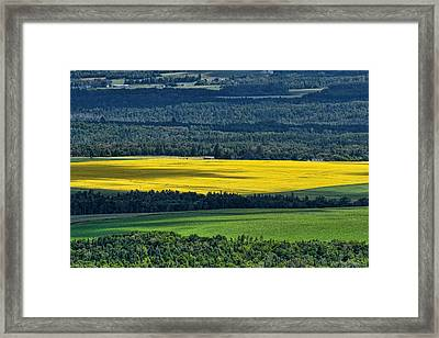 Framed Print featuring the photograph Patch Of Yellow by Gary Smith
