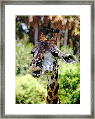 Patches Framed Print by Debbie Oppermann