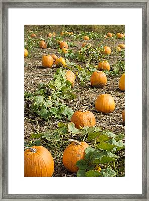 Framed Print featuring the photograph Patchin' by Christi Kraft