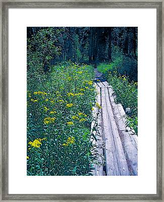 Path 4 Framed Print by Pamela Cooper
