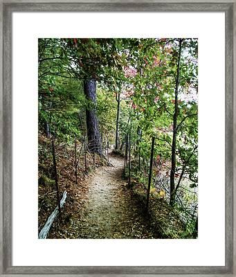 Path Along The Pond Framed Print