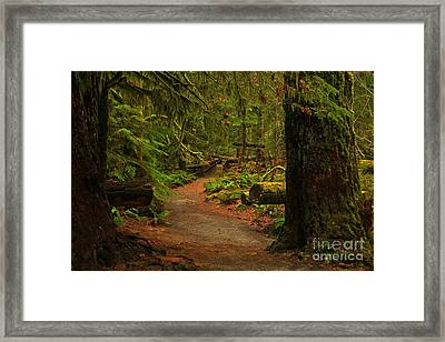 Path Between The Giants Framed Print by Adam Jewell