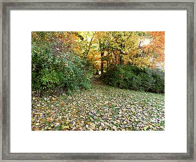 Path Entry Ahead Framed Print
