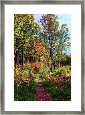 path in a beautiful country Park on a Sunny autumn day Framed Print