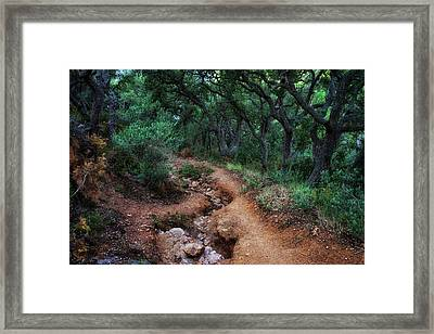 Path In Spooky Forest Framed Print