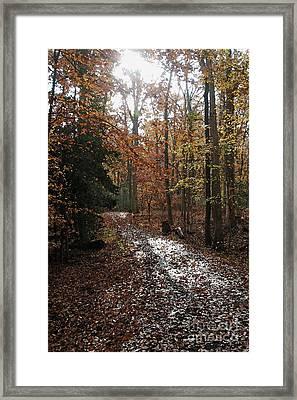 Path In The Autumn Color Framed Print by Hideaki Sakurai