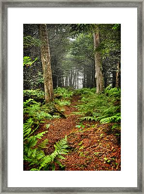 Path In The Ferns Framed Print