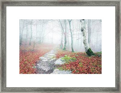 Path In The Forest Framed Print