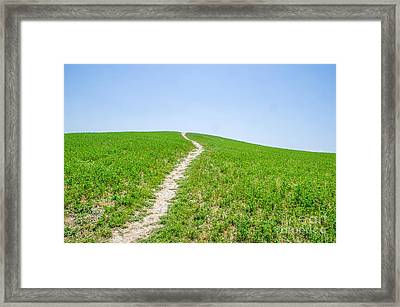 Path In The Green Canvas Print Framed Print by Luca Lorenzelli
