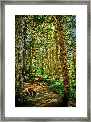 Path In The Trees Framed Print