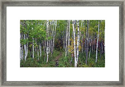 Path In The Woods 5 Framed Print