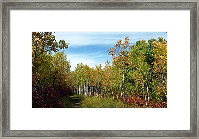 Path In The Woods 7 Framed Print