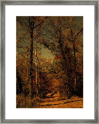 Path Into The Woods Framed Print by Nina Fosdick