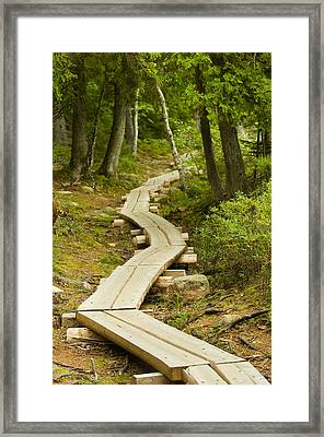 Path Into Unknown Framed Print