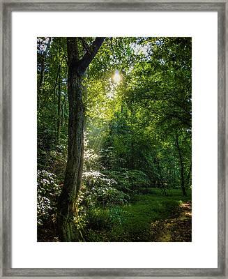 Path Lighting Framed Print