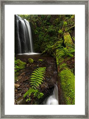 Path Of Life Framed Print by Mike Reid