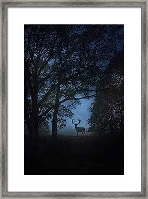 Path Of Shadows Framed Print