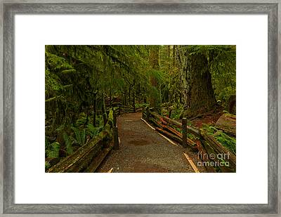 Path Of Solitude Framed Print by Adam Jewell
