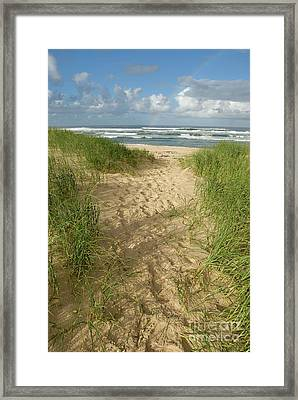 Path On Beach Leading To Ocean Framed Print by Sami Sarkis