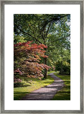 Framed Print featuring the photograph Path Through Autumn Forest by Scott Lyons