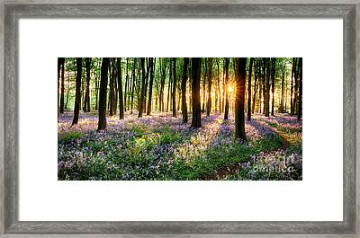 Path Through Bluebell Woods Framed Print by Simon Bratt Photography LRPS