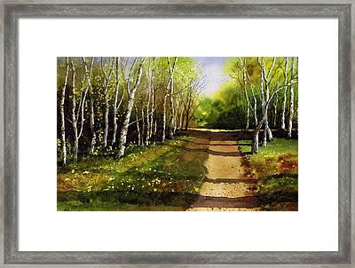 Path Through Silver Birches Framed Print by Paul Dene Marlor