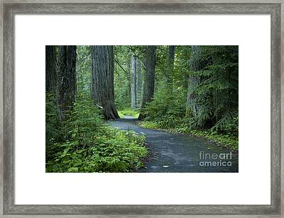 Path Through The Cedars Framed Print by Idaho Scenic Images Linda Lantzy