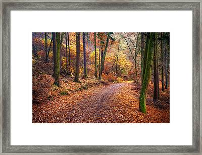 Path Through The Colorful  Autumn Framed Print by Jenny Rainbow
