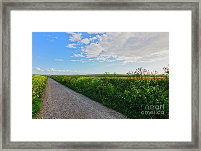 Path Through The Fields Framed Print by Terri Waters