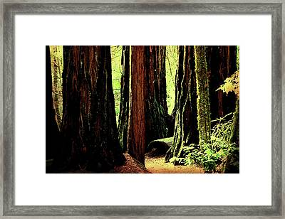 Path Through The Forest Edge . 7d5432 Framed Print by Wingsdomain Art and Photography