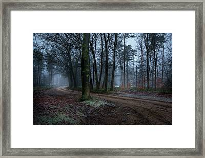 Path Through The Forrest Framed Print