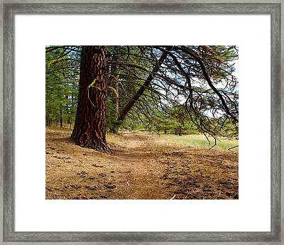 Path To Enlightenment 1 Framed Print