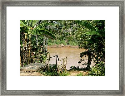 Path To The Amazon River Framed Print