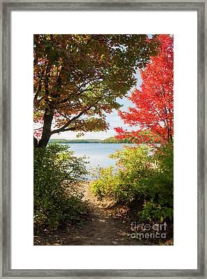 Path To The Lake Framed Print by Elena Elisseeva
