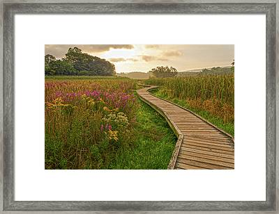 Path To The Light Framed Print by Angelo Marcialis