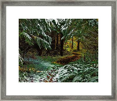 Path To The Light Framed Print by Wilbur Young