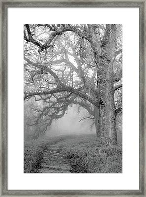 Path To The Unknown Framed Print by Alessandra RC