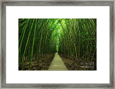 Path To Zen Framed Print