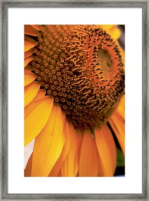 Paths Of Petals, Days Of Subtle Framed Print by Christopher Phelps