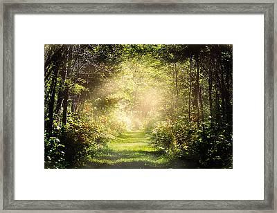Pathway Framed Print by Gary Smith