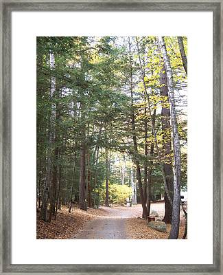 Pathway In The Woods Framed Print by Rosanne Bartlett
