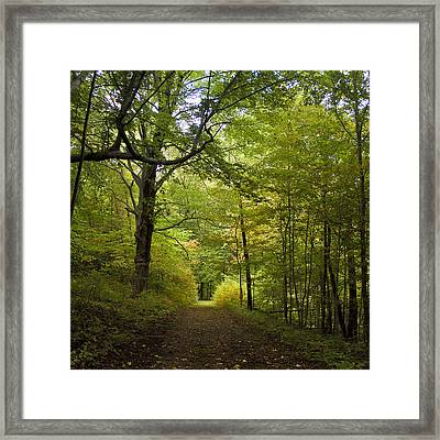 Pathway Lined By Trees Framed Print