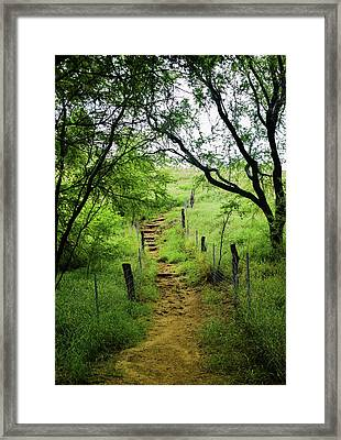 Framed Print featuring the photograph Pathway Of Life by Pamela Walton