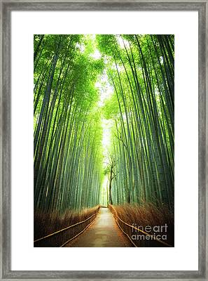 Pathway Through The Bamboo Grove Kyoto Framed Print by Jane Rix