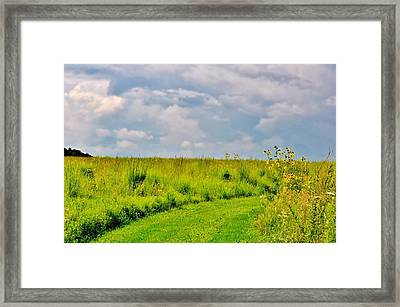 Pathway Through Wildflowers Framed Print