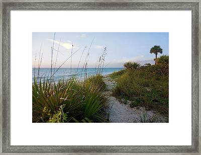 Pathway To Barefoot Beach  In Naples Framed Print