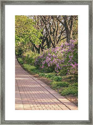 Pathway To Beauty In Lombard Framed Print