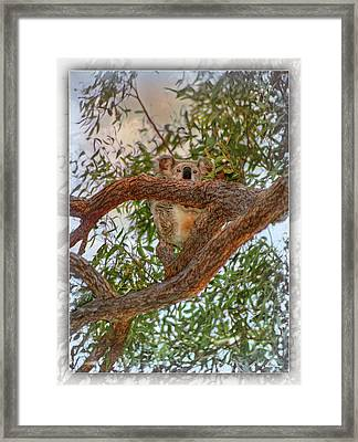 Framed Print featuring the photograph Patience Brings Koalas by Hanny Heim